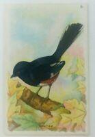 Arm & Hammer Useful Birds Of America Seventh Series No 6 Towhee 1934 Church