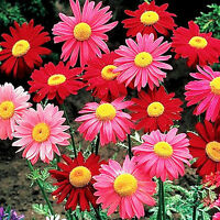 Natural Mosquito Repelling Flower Seeds Garden Plant Beautiful Flower Seeds Tree