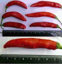 15 SEEDS Aji Camba Hot Pepper Capsicum baccatum