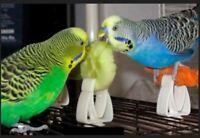 Clip Universal für Käfig Vögel Salat Gurke Knochen Sepia Panizo Dübel