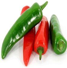 JALAPENO CHILLI mild pepper plants – 4-cell seedling punnet