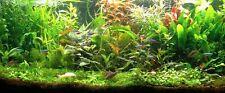 PROMO Lot de 60 plantes aquarium 9 varietes a racines et tiges +2 cladophora en+