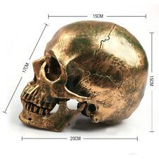 NEW 1:1 Bronze Skull Human Anatomical Anatomy Head Medical Model