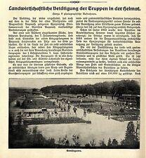 Garnisionskompagnie 7.bayr.Infanteriegegiment (Gartenwirtschaft ) 1916 *  WW1