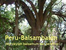 ***Perubalsam, natürlich  (Balsamum peruvianum) El Salvador/Mexiko, 10ml