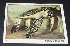 N°7 TORTUE MARINE  PANINI 1970 TOUS LES ANIMAUX EDITIONS DE LA TOUR