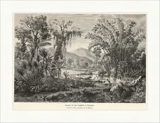 Scenerie bei San Cristobal in Venezuela A. Göring Jungel Bäume Holzstich A 0350