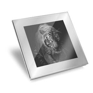 Silver Glass Coaster - Black & White Tiger Wild Cat  #2767
