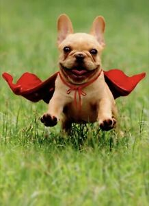 Frenchie Jumping Wearing Red Cape - Avanti Dog Thank You Card by Avanti Press