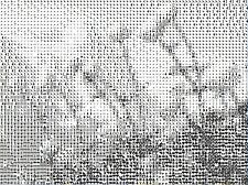 CONVERT ANY PHOTO TO CROSS STICH CHART DMC ANCHOR ARIADNA MADEIRA