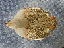 Hungarian Partridge Skin Feathers Fly Tying #1 Select Trout Salmon Pelt Wings