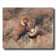 Bighorn Sheep Lodge Cabin Kids Wall Picture Art Print