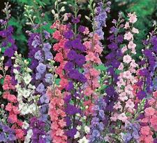 DELPHINIUM, GIANT IMPERIAL 100+ SEEDS ORGANIC , A GREAT CUT FLOWER