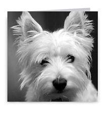 Westie Greeting Card - Dog West Highland White Terrier