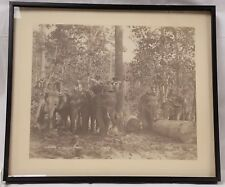 Antique Photograph Burma Working Elephants DARWOOD & CO. SHWE LEE FOREST 1 OF 3