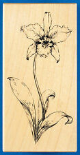 Rare PSX Cattleya Orchid Rubber Stamp K-3350 - Exotic Flower with Leaves Sketch