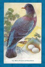 1910s RAPHAEL TUCK PC BRITISH BIRDS & THEIR EGGS - WOOD PIGEON