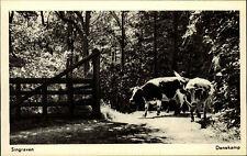 Denekamp Niederlande alte Ansichtskarte ~1950/60 Singraven Waldpartie Kühe