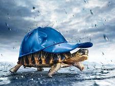 Incorniciato stampa-Tartaruga di indossare un Cappellino In The Rain (foto poster arte)