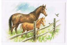 HORSES - FRED FARM STUDIO -  POSTCARD UNUSED