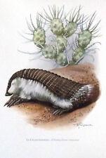 Impression Affiche Art Print Image Histoire Naturelle le Chlamydophore truncatus