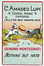 POSTCARD PANAMA HATS ADVERTISING LUPI DOGS AT PANAMA CANAL