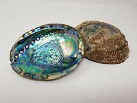 """Extra Large XL Abalone Seashell 6-7"""" (2 pcs), Smudging Bowl"""