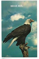 AMERICAN BALD EAGLE Bird of Prey United States USA BAD AXE Michigan Postcard