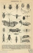 1892= INSETTI = Animali = Antica Stampa = Old ENGRAVING