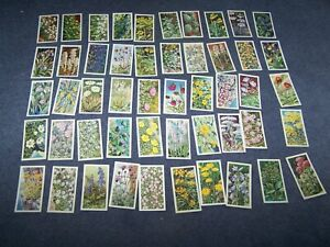 Loose Brooke Bond Picture Cards - Wild Flowers Series 3 ~  50/50