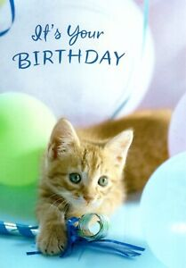 Happy Birthday Blue Eyes Eyed Playful & Fun Kitten Hallmark Greeting Card