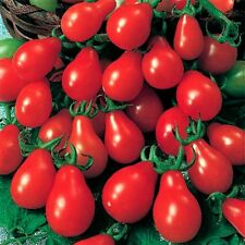 TOMATO 'Baby Red Pear' 25+ seeds sweet vegetable garden pear shaped fruit cherry