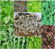 200 Seeds Green Salad Mixed Butter Cos Oak Rocket Reine des Glaces Organic  ^_^