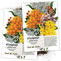 Autumn Blaze Milkweed Seeds (Asclepias species) Twin Pack / 100 Seeds In Each