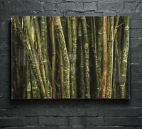 Canvas Glass Wall Art Print Picture Large ANY SIZE Bamboo Texture Tree p169664