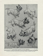 WESTIE WEST HIGHLAND WHITE TERRIER DOGS IN VARIOUS POSES 1934 OLD DOG PRINT