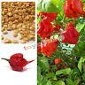 Carolina Reaper Chilli Pepper Seeds X 10 - Super Hot 100% GENUINE