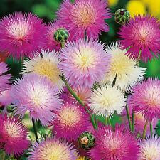 Sweet Sultan - Crown Mixture - 250 Seeds