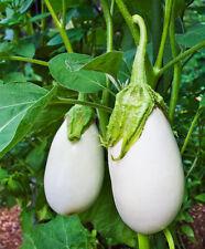 Eggplant Seeds White Star Hybrid 200 Egg plant seed BULK SEEDS