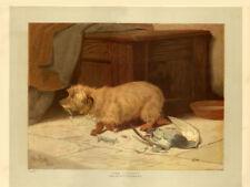 "DANDIE DINMONT TERRIER DOG ANTIQUE ART PRINT ENGRAVING - 1886 - ""The Culprit"""