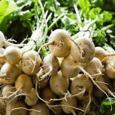 250 White Albino Beet Seeds - Everwilde Farms Mylar Seed Packet