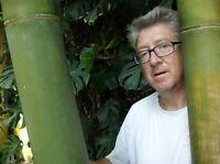 dieser Bambus wächst so schnell, da können Sie dabei zusehen !