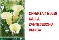 BULBI PRIMAVERILI CALLA ZANTEDESCHIA CANTOR CONFEZIONE DA 1 BULBO BULBS
