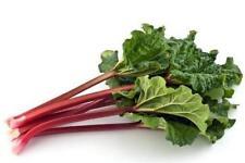 Seeds Rhubarb Leader Vegetable Herb Seed Organic Russian Ukraine