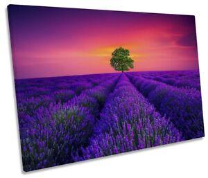 Tree Lavender Field Pink Sunset Print SINGLE CANVAS WALL ART Picture Purple