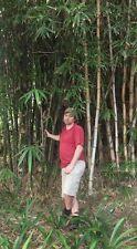 Riesen-Gras : Winterharter schnellwüchsiger Wasserbambus für den Garten / Samen