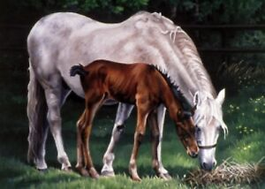 """""""MARE AND FOAL"""" GREETING CARD"""