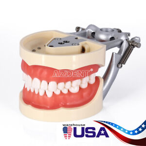 Kilgore NISSIN 200 Type Dental Typodont Model With Removable Teeth M8012 USA