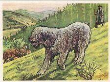 26/221 sammelbild-il Odenwalder pastori cane