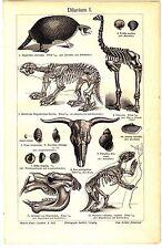 ca 1890  Diluvium geology Pleistoceen Antique lithograph  print